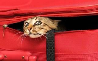 Путешествие с домашними животными за границу: как правильно организовать поездку и перевозку питомца
