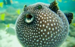 Какие виды рыб самые крупные на Земле — список, фото и характеристика